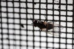 Клипарт depositphotos.com, муха, москитная сетка