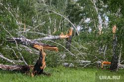 Последствия урагана в селе Малое Песьяново. Мокроусовский район. Курганская обл, ураган, разрушения, поваленный лес