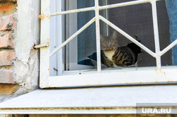Немецкий квартал. Челябинск, сетка, решетка, котик, старые дома, дыра