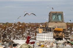Проверка ОНФ и Общественной палатой Тюменской области полигона твердых бытовых отходов на Велижанском тракте. Тюмень, мусор, птицы, отходы, полигон тбо, чайки, свалка, экология