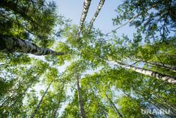 Международные соревнования на Кубок Губернатора ХМАО-Югры по гребле на обласах. Нефтеюганск, лес, родина, березы, природа