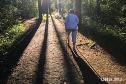 Экологическая тропа, тропа пенсионеров в парке Гагарина. Челябинск, лес, парк, скандинавская ходьба, экологическая тропа, тропа пенсионеров, городской бор