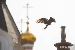 Плотинка. Екатеринбург, купола храма, птица