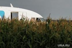Самолет «Уральские авиалинии», совершивший аварийную посадку. Московская область, уральские авиалинии, самолет, аварийная посадка