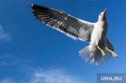 Виды Стокгольма. Швеция, птица, чайка
