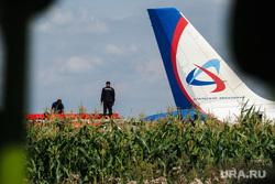 Самолет «Уральские авиалинии», совершивший аварийную посадку на кукурузном поле. Московская область, уральские авиалинии, airbus А321, аварийная посадка, аэробус а321, эйрбас