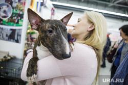 Международная выставка собак. Пермь, собака, домашний питомец, выставка собак, бультерьер