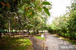 Пресс-тур «Развитие метрополитена в Екатеринбурге». Екатеринбург, сквер, парк, дерево