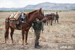 Учения горного мотострелкового соеденинения на полигоне Кара-Хаак. Республика Тыва, Кызыл, лошади, кони, военные, наездники, всадники, военные учение, полигон кара хаак, вьючно-транспортный взвод, конное подразделение, монгольская порода
