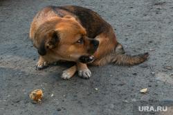 Бездомная собака. Курган, собака, бездомные животные, пес, бездомная собака