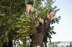 Ураган, обрыв проводов. Челябинск, сломанное дерево, обрыв проводов