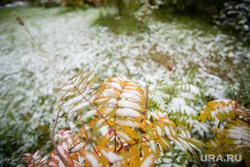 Первый снег. Сургут, зима, природа, первый снег, осень