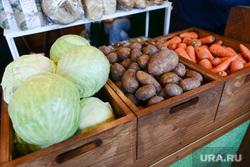 Открытие XXIV областной агропромышленной выставки «АГРО-2017». Челябинск, капуста, овощи, морковь, картофель, сельское хозяйство