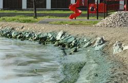 Пруд под Нижним Тагилом, вода из которого поступает в дома, заполнился мертвой рыбой. ВИДЕО
