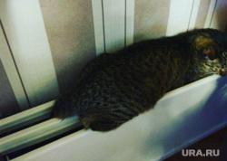 Кошка на батарее, кошка, батарея, кот, тепло, отопление, отопительный сезон