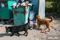 Клипарт, разное. Курганская область, помойка, мусорный контейнер, бездомные собаки