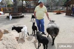 Депутаты городской думы в Челябинском зоопарке. Челябинск, овцы, даллакян карен, баран, контактный зоопарк