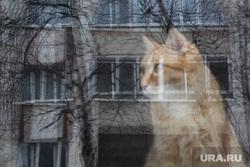 Виды города. Тюмень, кот, отражение, окно