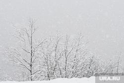 Виды Сочи, снег, зима, снежный лес