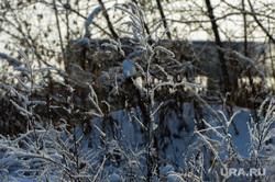 Природа в челябинском городском бору. Челябинск, иней, кусты, природа