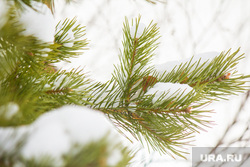 Собаки и дачи. Нижневартовск, снег, новый год, зима, погода, сосна