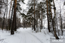 Дачи челябинских ВИП на озере Увильды, которые требует снести прокуратура. Аргаяшский район, Челябинская область, снег, зима, деревья, лес, лесная дорога, дорога в лесу