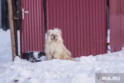 Деревня Ярки, зимник. Ханты-Мансийский район, двор, собака