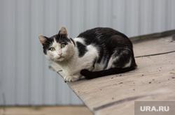 Клипарт. Магнитогорск, кошка, кот, козырек, улица