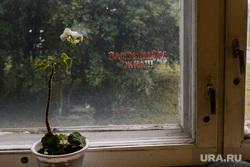 Учебный центр Екатеринбургского метрополитена и депо. Екатеринбург, цветок в горшке, тепло в доме, окно, комнатные цветы, закрывайте окна, оконная рама, стеклопакет