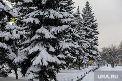 Мороз. Зима. Погода. Климат. Челябинск, снег, зима, елки, климат, мороз, снегопад, погода, холод