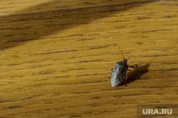 Виды Венгрии. Будапешт, Сзалка, Пакш, насекомое, жук, лесной клоп