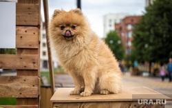 «Большая городская мастерская» от фонда «Город может» на ул. Красноармейская. Екатеринбург, собака, большая городская мастерская, город может, может