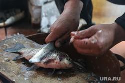 Рыба. Заболотье. Тюменская область, карась, рыба, нож, чистка рыбы