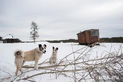 Доставка товаров первой необходимости, продуктов питания и почты в труднодоступные районы Свердловской области , собаки, деревня