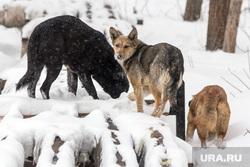 Клипарт. Магнитогорск, собаки, бездомные животные, зима