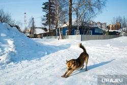 Виды города зимой. Сургут, зима, дворняга, собака кланяется
