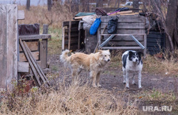 Клипарт. Магнитогорск, собаки, дворняги