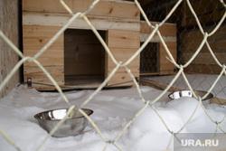 Общественники проверяют службу отлова собак