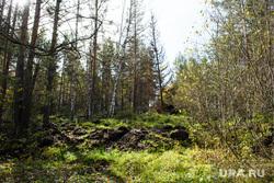 Место оползня после сентябрьского землетрясения 2018 года. Челябинская область, Катав-Ивановск, лес, природа урала