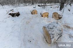 Вырубка леса, против которой выступают местные жители. Челябинск, дрова, спиленные деревья, пни