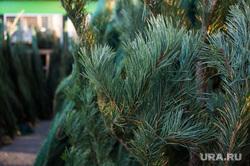 Рейд по пунктам продажи искусственных и натуральных елок. Екатеринбург, елка, новогодняя елка, продажа елок