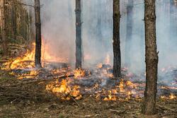 Клипарт depositphotos.com, пламя, дым в лесу, лесные пожары, огонь, пожар, тушение пожара, пожарник, пожарный, природа, деревья горят, экология