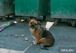 Бездомная собака. Курган, собака, мусорные контейнеры, бездомные животные, пес, бездомная собака, помойка