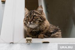 Клипарт, разное. Курган, кошка, домашние животные, домашние питомцы, кот в окне