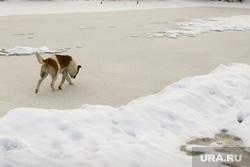 МЧС пресс-конференция по безопасности Крещенских купаний Набережная 10 а Курган, собака, тонкий лед
