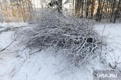 Вырубка леса, против которой выступают местные жители. Челябинск, валежник