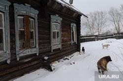 Бутка. Брат Ельцина. Архив., заброшенный дом, бродячая собака, бутка
