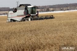 Алексей Кокорин в полях Курганская область, комбайн, пшеница, уборка урожая