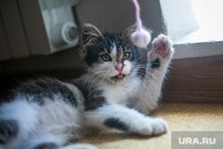 Кот, найденный на стадионе Лужники во время полуфинала ЧМ-2018 по футболу. Москва, кошка, кот, котенок