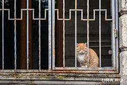 Виды Сочи, кошка, кот